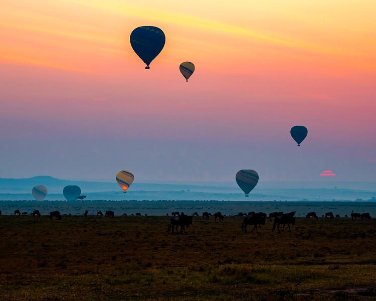 Maasai Mara Wildebeest & Balloons