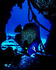 Angel Fish in a Cave