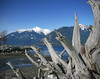 Petrified View Of British Columbia<br /> JNA