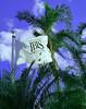 Ibis Winds<br /> John Hayes