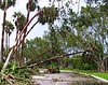 Hurricane Winds<br /> Arthur Schreibman