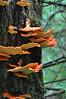 Temperate rainforest- Pacific Rim National Park<br /> Maureen McCormack