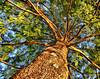 Under Tree - Steve Telchin