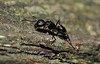 Ant on a Log (very low down!)<br /> Maureen McCormack