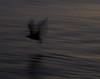 NightBird<br /> Paula Kaminsky Davis