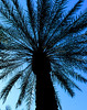 Arizona Palm<br /> Steve Rudy