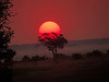Chobe Sunset<br /> John Hayes