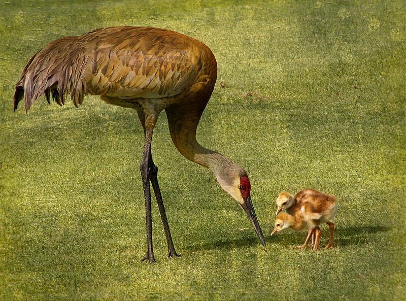 Mom Feeding Her Chicks<br /> Sandy Friedkin