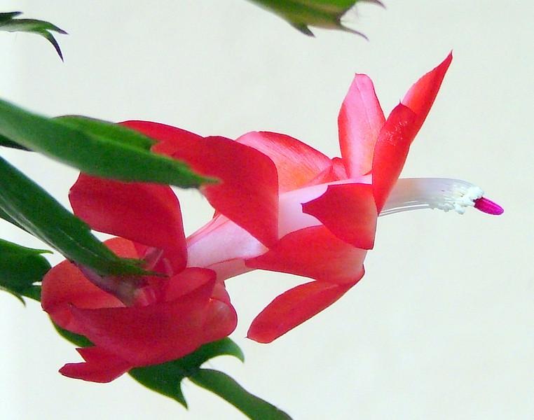 Bloom in Flight