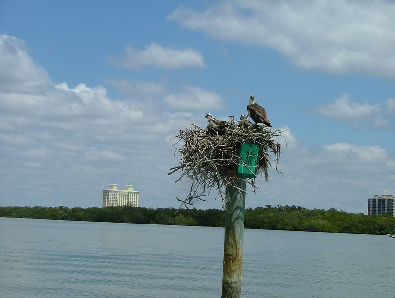 Happy Family, Estero Bay
