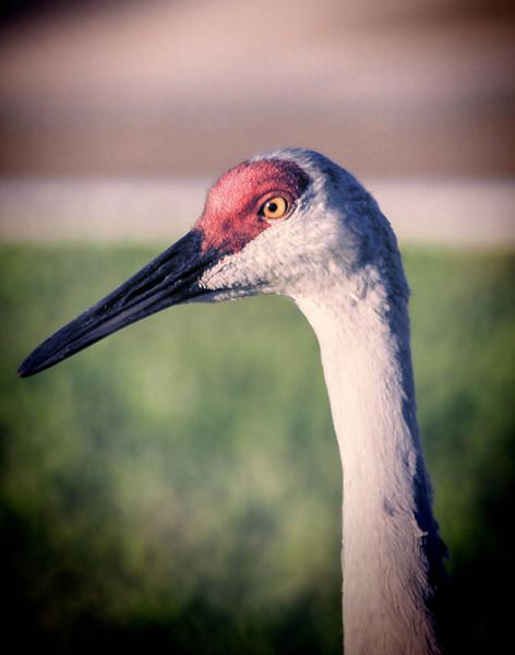 Ibis Beauty