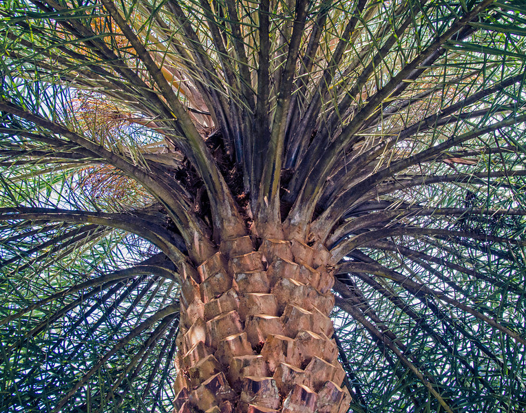 Under the Spreading Palm