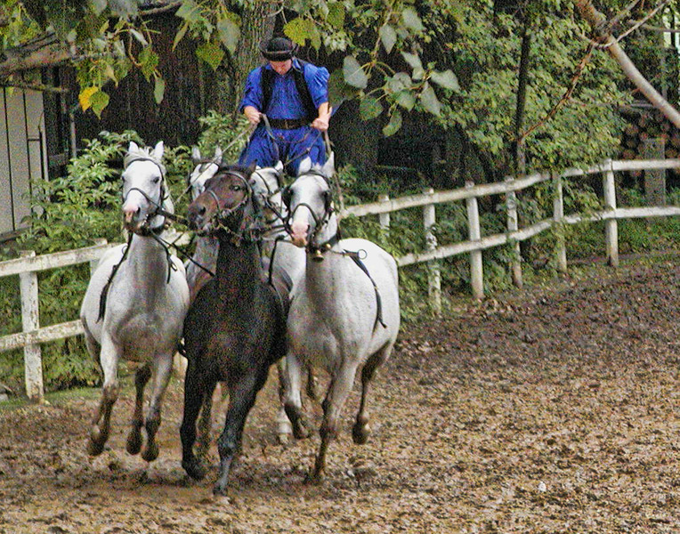Hungarian Horseman