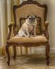 Annie's Favorite Chair