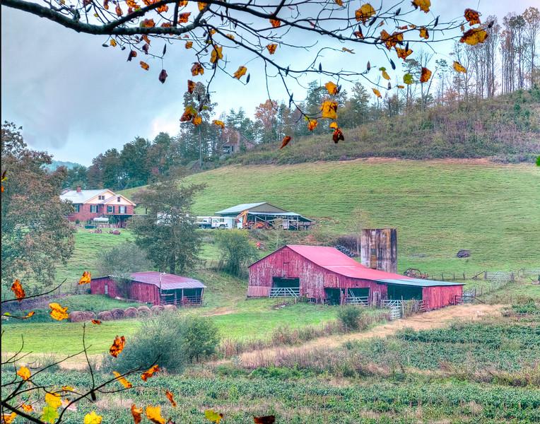 Georgia Farm