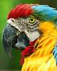 Parrot Pride