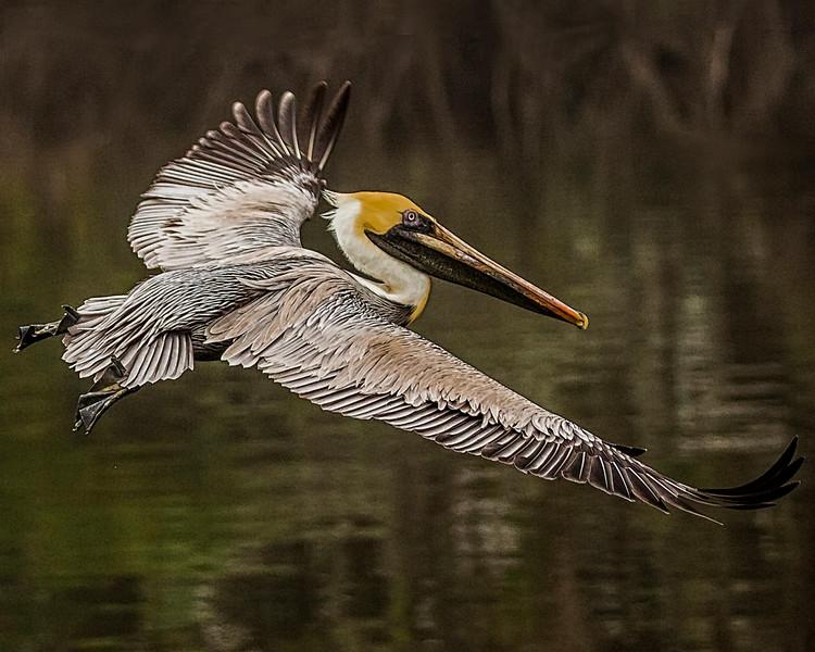 Challenge #89 - Birds in Flight
