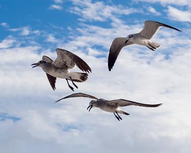 Friends in Flight