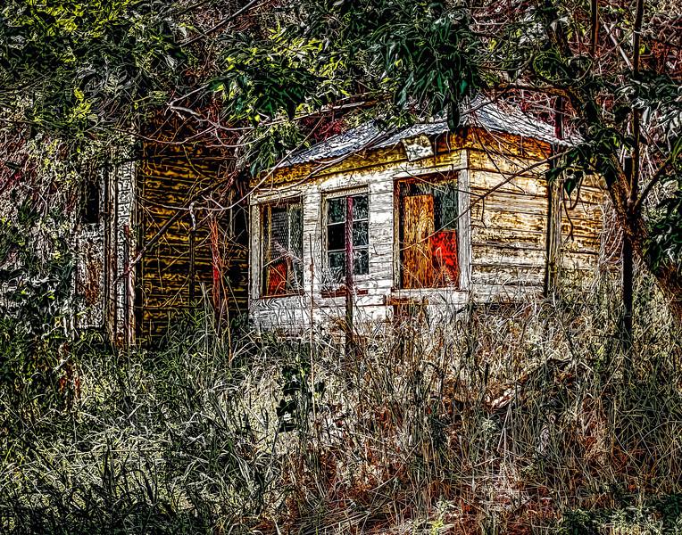 Cabin Framed by Woods