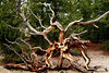 Yellowstone Roots<br /> Windchimes