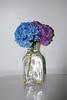 Flowers in Glass Vase<br /> <br /> Charley Finklestein