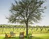 Winery in Fort Pierce