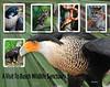 A Visit To Busch Wildlife Sanctuary<br /> Sandy Friedkin