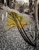 Shadow grows leaves.   David Rosenstein