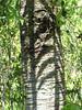 Fern on Tree<br /> Connie Callison
