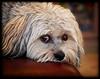 Barney Looking For Trouble<br /> Sandy Friedkin