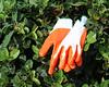 gloves  Jay Schwartz
