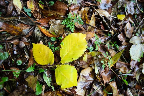 3 feuilles jaunes