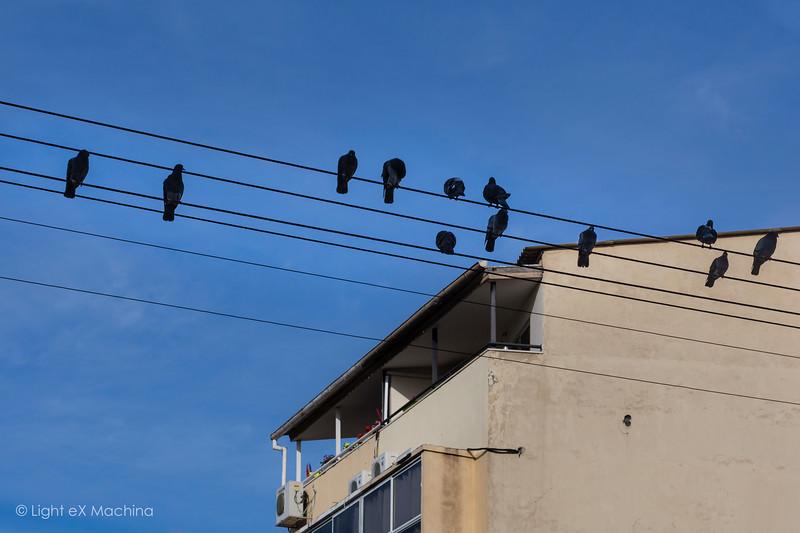 Birds muscial score
