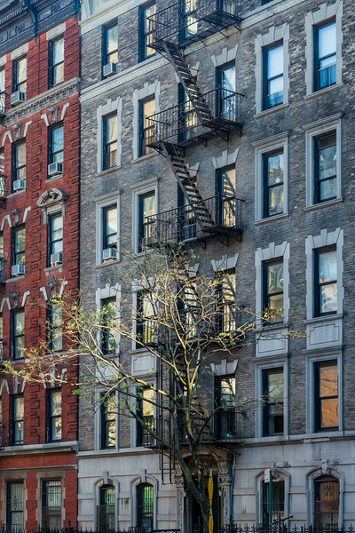 NYC façades - The light tree