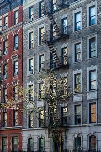 NYC façades - The light tree