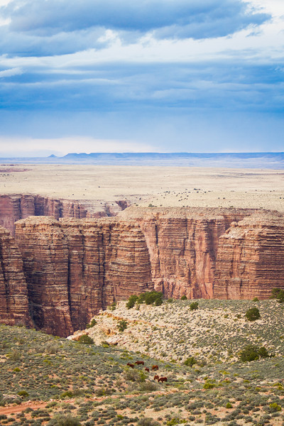 Wild Horses & Canyons