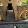 Cat by the Arkadi monastery.