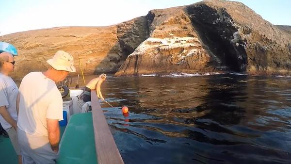Channel Islands Dive Trip 2018