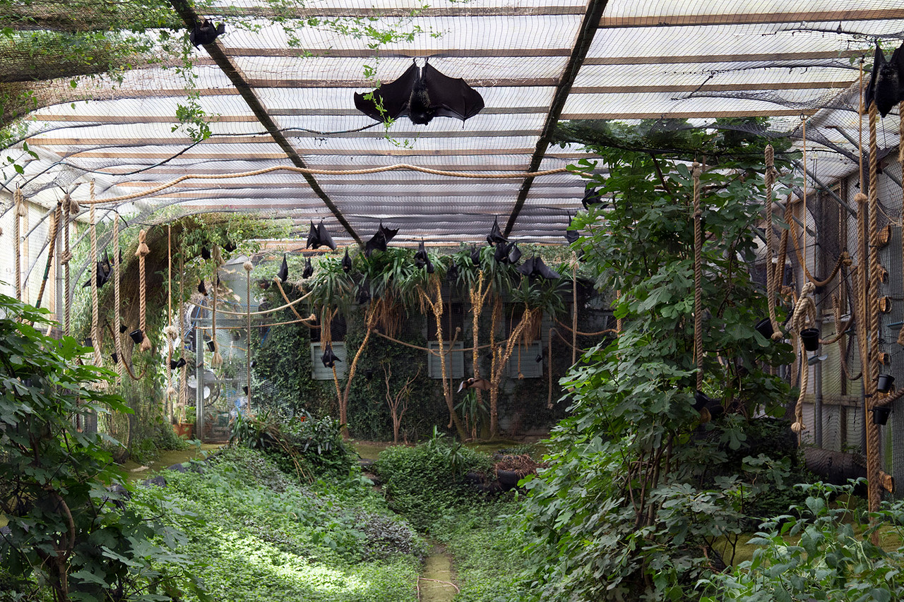 visiting durrell wildlife park