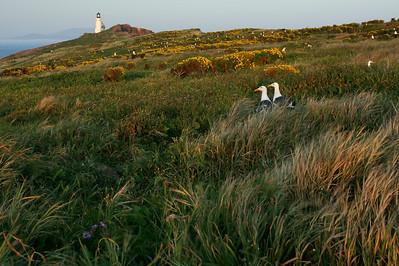 Anacapa Island, Dusk, March 2010. ac0310_1765
