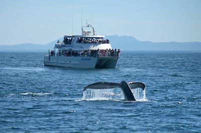 whale2_1416