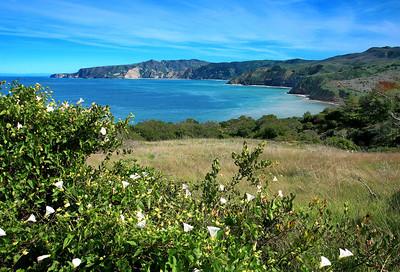 Pelican Trail, Santa Cruz Island p0310_0407