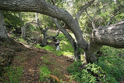 Pelican Trail, Santa Cruz Island p0310_0264