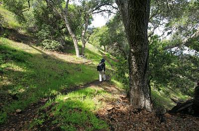 Pelican Trail, Santa Cruz Island p0310_0266