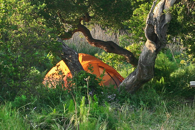 Camp in the oak grove, Del Norte. 0411_1646r