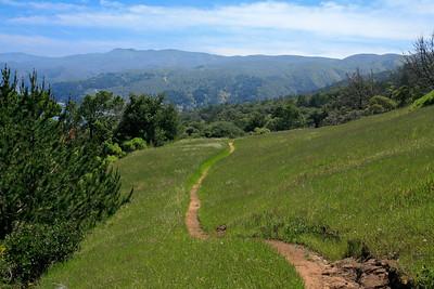 Pelican Trail. 0411_2472