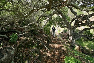 Pelican Trail Santa Cruz Island p0310_0302