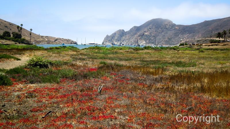 Catalina Two Harbors