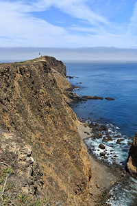 Pinniped Point