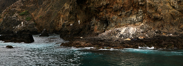 California sea lions hauled out on the jagged rocks near Arch Rock